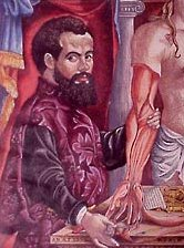 andreas vesalius and anatomy essay 2) how did he follow in the traditions of ancient anatomy  2 andreas vesalius  louvain (1530) paris (1533) padua (1537) six anatomical pictures (1538).